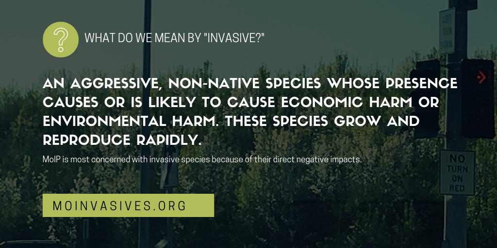 Missouri Invasive Plant Task Force Definitions: Native, Invasive, Aggressive and Non-native