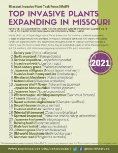 Poster of Top Invasive Plants Expanding in Missouri